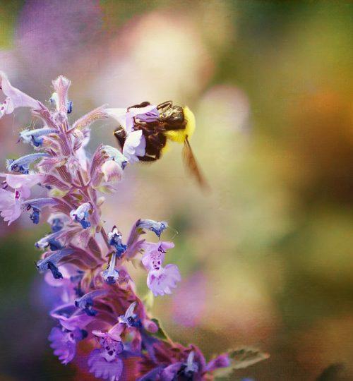 april-4-bee-calendar-1280X720