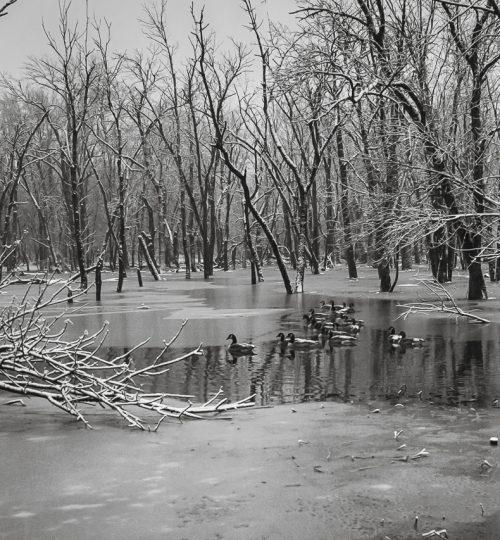 ducks_on_the_river_full