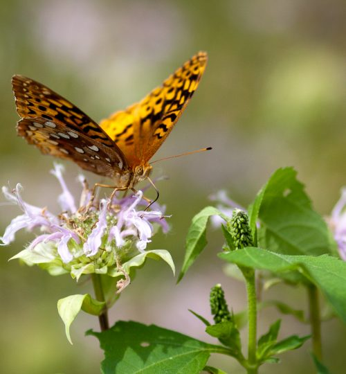hungry_butterfly_full